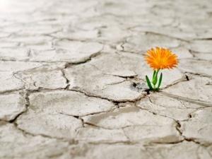 Esperanza-seco-y-flor